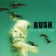Bush :The Science Of Things (Remastered)