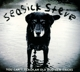 Seasick Steve :You Can't Teach An Old Dog New Tricks