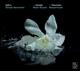 Bernardini,Alfredo/Zefiro :Wassermusik/Hamburger Ebb und Flut