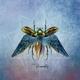 Zaius :Of Adoration