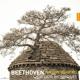 Quatuor Mosaiques :Beethoven The Late Quartets