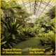 Various (compiled by Jan Schulte) :Tropical Drums of Deutschland