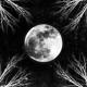Corpus Christii :Pale Moon (LP)