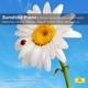 Argerich,M./Barenboim,D./Kissin,Y./Lang Lang/+ :Sunshine Piano-Klaviermusik Die Glücklich Macht