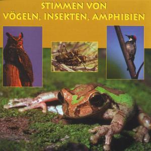 VOGELSTIMMEN/+ - STIMMEN V.VÖGELN,INSEKTEN,AMPH