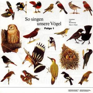 VOGELSTIMMEN - SO SINGEN UNSERE VÖGEL 1