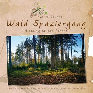 SAERSTEDT,PERLUND - WALD SPAZIERGANG